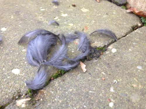 Bij thuiskomst blijkt  een moord gepleegd. Veren dwarrelen als stille getuigen door de tuin. De vogel gevlogen.