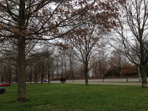 Op weg naar vrienden, groen gras, bomen met  verdord blad. Winter heeft pauze.