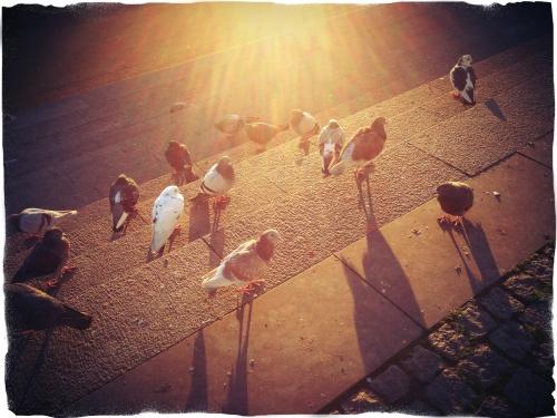 De duiven nemen een zonnebad. Gekoer om de beste plekjes.