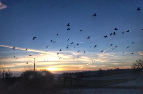 Het lawaai van de trein laat ze opvliegen terwijl ik probeer de zonsopgng vast te leggen. Het plaatje is af.