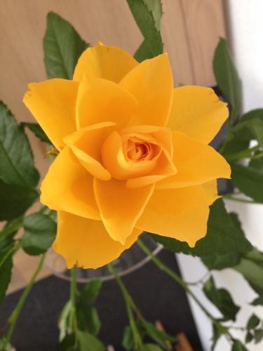 Zonnig geel in een vaas. Nog meer blijheid.