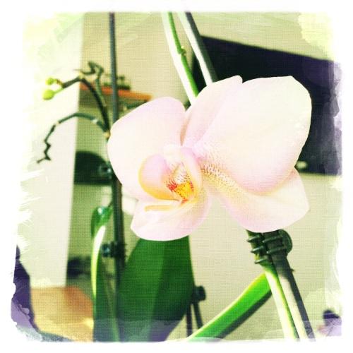 ben dol op bloemen maar orchideën zijn niet echt mijn favoriet. te afstandelijk, beetje hooghartig ook. Probeer er eens met andere ogen naar te kijken.