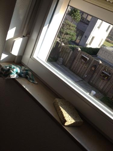Stralende zon schreeuwt om schone ramen...nou vooruit dan.