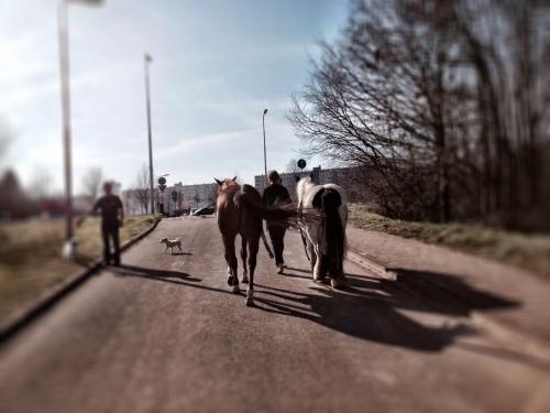 Tijdens de wandeling kwam ik een mevrouw tegen die haar paarden, een hond en haar moeder uit aan t laten was. Beetje vreemd wel..