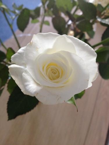 Thuis staan ook mooie bloemen. Witte rozen met een zacht geel hart.