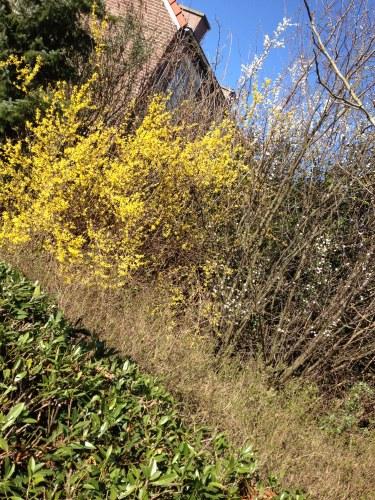Aan de wandel...lentegeel en bloesemwit geven extra kleur aan hemelsblauw