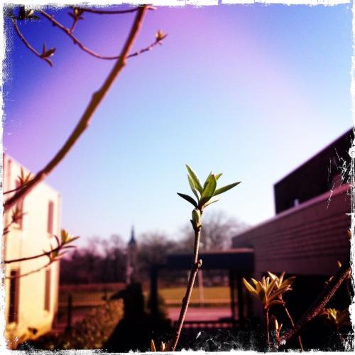 Zo begint de lente. Ik speel met nieuwe hipstagram filters...