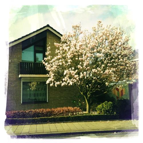 mooie huizen en bloeiende magnolia's. Laat me denken aan een van mijn favoriete films.
