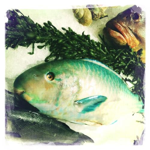 Verse vis zonder boter.