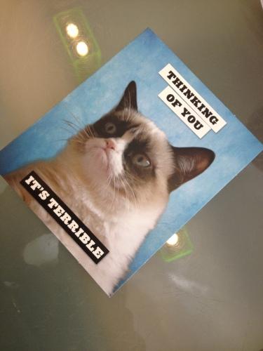 Grumpy cat...jaja