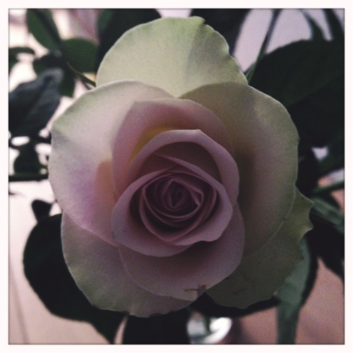 We sluiten deze week af met een roos. Dag dag, tot morgen!