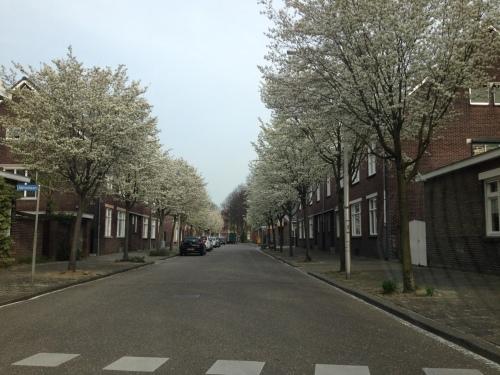 Bijna thuis, nog snel een foto van de Lambertistraat met de bomen in bloei