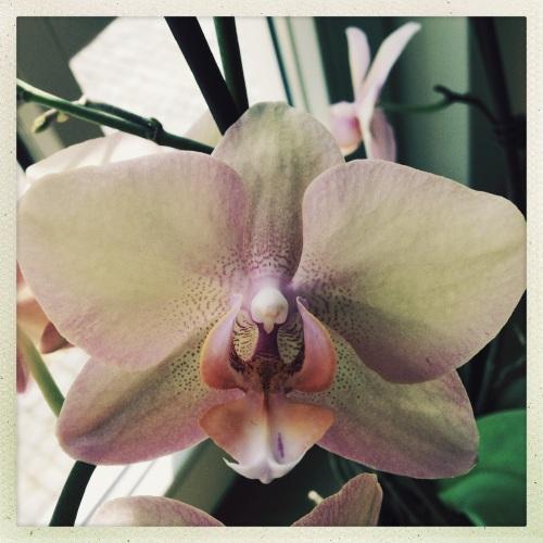 De orchideen doen het goed...