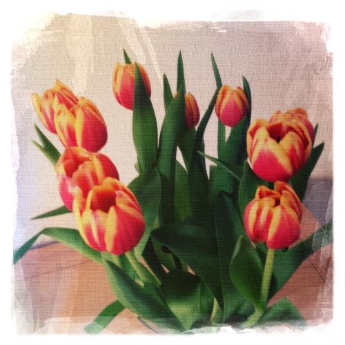 Spelen met filters, tulpen zijn minder gewillig dan rozen.