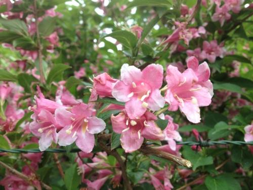 Ik vind bloemen op mijn pad.