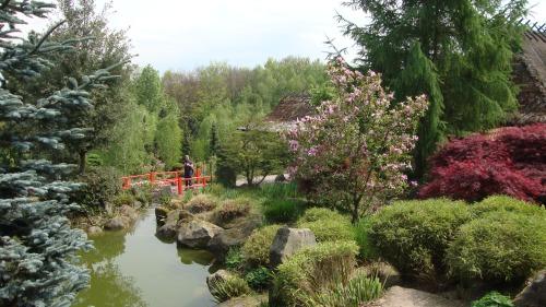 Water, bonsai's en bloesem
