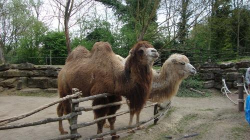 De afdeling Midden-Oosten, kamelen passen wel, maar wat Portugal daar nu mee te maken heeft?