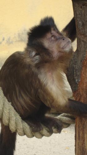 We sluiten af bij de apen. Lijkt me een prima plek.