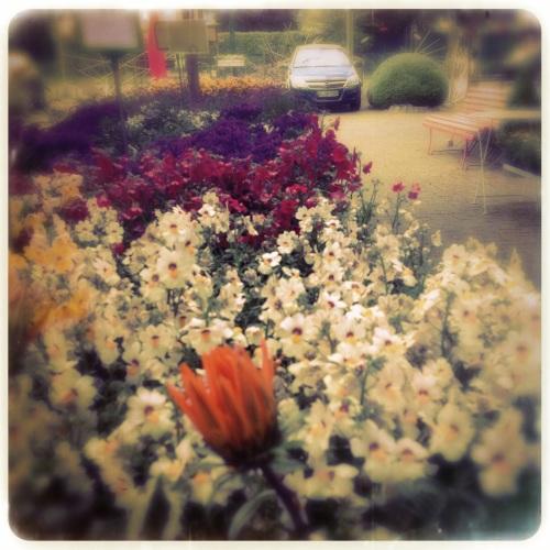 Mooie bloemen maar geen fijne bediening.