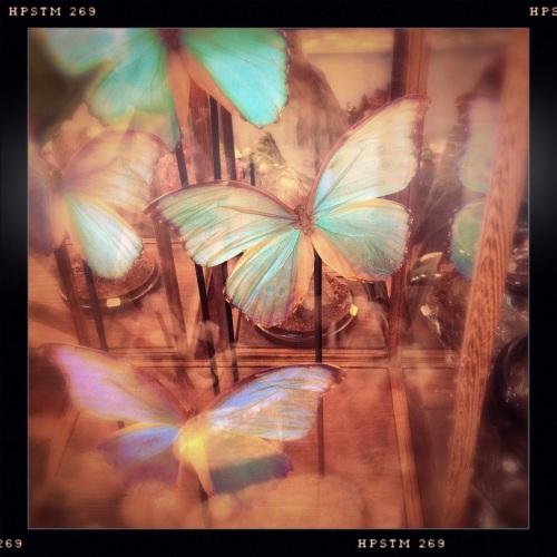 Eerst een bezoekje aan de bloemenwinkel. Vlinders in een glazen huis.