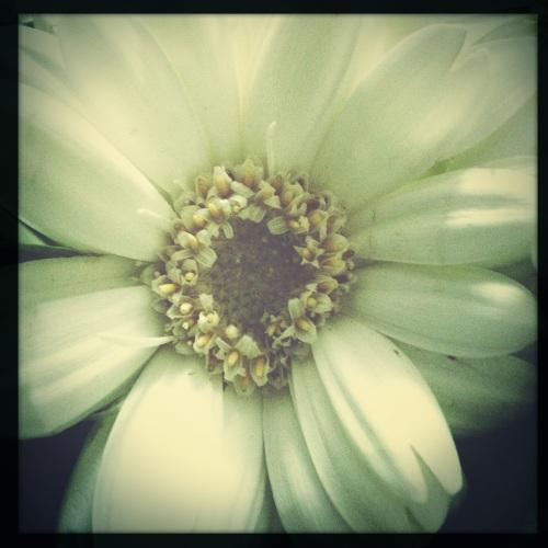 De rest van de middag test ik alle lenzen van hipstamatic op de bloemen...