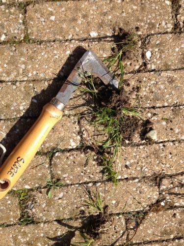 De belangrijkste klus vandaag...de tuin onkruidvrij maken