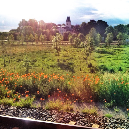 Hallo Maastricht! zijn die bloemen voor mij?