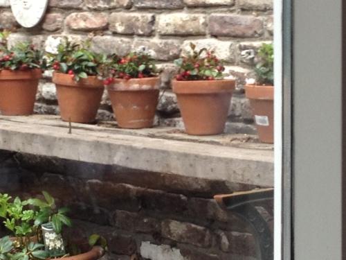 Geen beste foto, maar vandaag heb ik huismuis voor het eerst betrapt. Zien jullie hem ook?