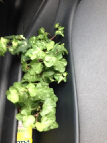 Twee miniplantjes in het zijvak