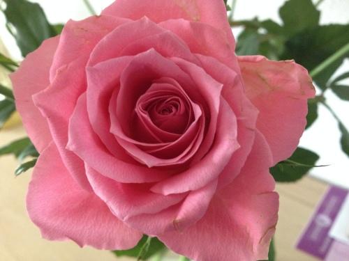 Nou vooruit, nog eentje dan. Ze blijven mooi, rozen.