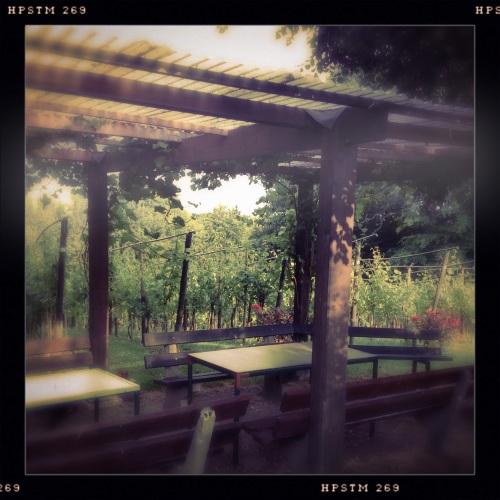 De wijngaard.