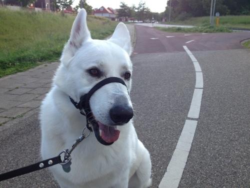 Hé, toch een hond, En wat voor een!