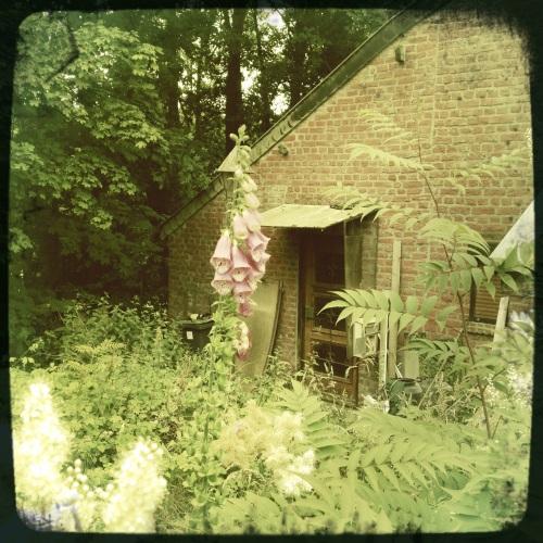 Ik sta even stil bij een vervallen huisje dat tegen het bos aan lijkt te leunen. De verwilderde tuin nodigt uit, maar ik ben niet moedig genoeg.