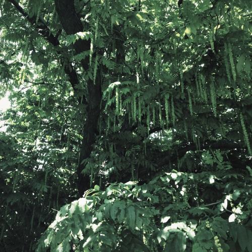 Geen idee wat voor een boom dit is, maar hij is in ieder geval bijzonder en mooi