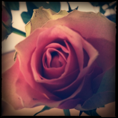 Zulk nieuws verdient een roos