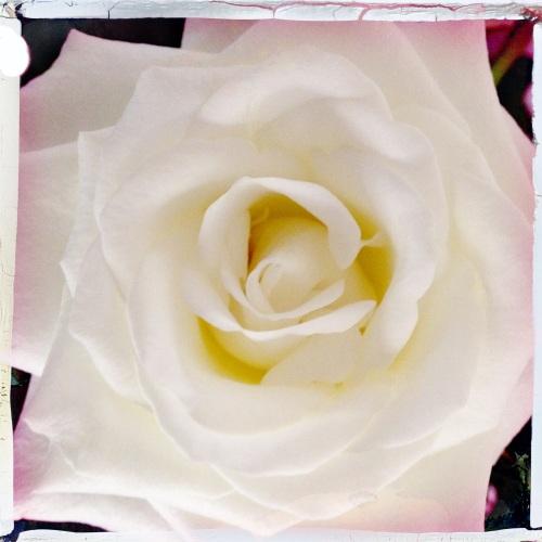 De roosjes staan er weer mooi bij.