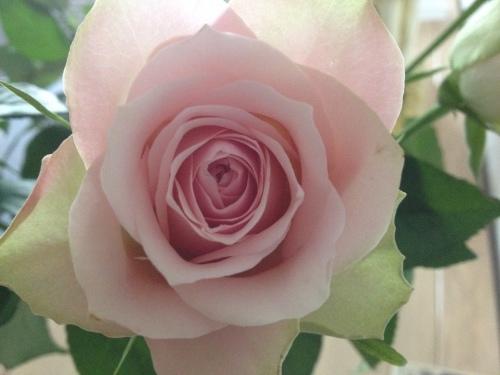 Iemand nog een roosje?