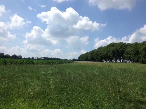 De ham, korenvelden, mais, blauwe lucht en witte wolken.