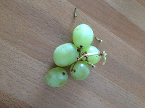 De druiven waren zoet