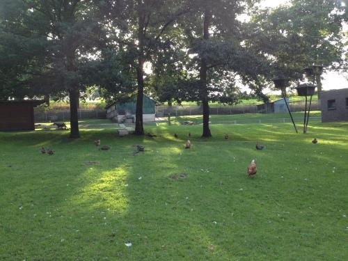 Kippen scharrelen nog een beetje in het rond terwijl zonnestralen langzaam maar zeker verdwijnen