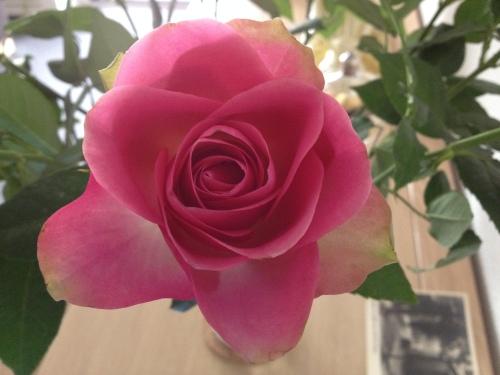 De rozen doen het weer prima.