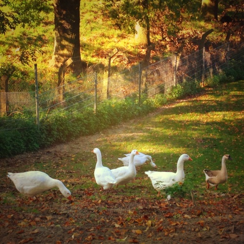 Something told the wild geese it was time to fly. Summer sun was on their wings, winter, winter, winter in their cry ~Rachel Field~
